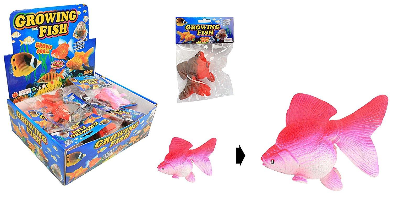 poisson-grossissant